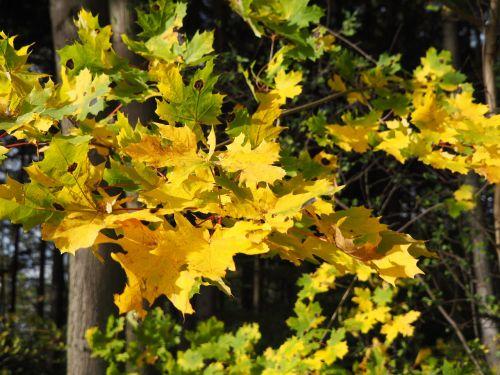 leaves autumn autumn colours