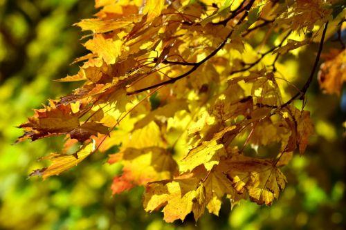 leaves autumn fall foliage