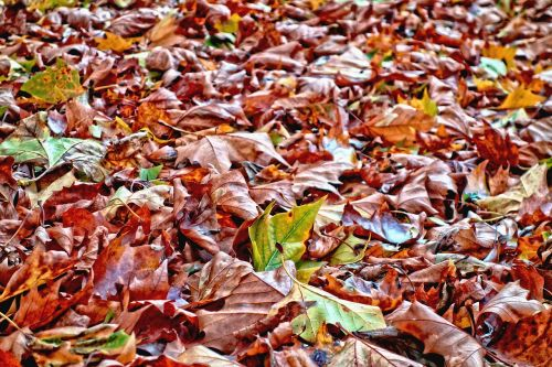 leaves fallen leaves autumn leaves