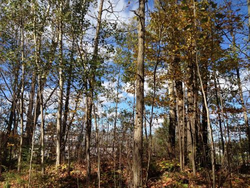 leaves trees forest