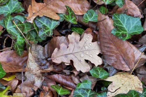 leaves fall foliage