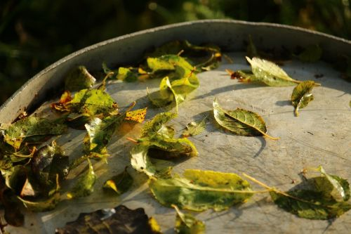 leaves autumn metal