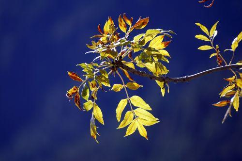 leaves yellow autumn
