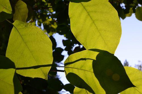 lapai,saulė,medžiai,žalias lapas,žalias,šviesa