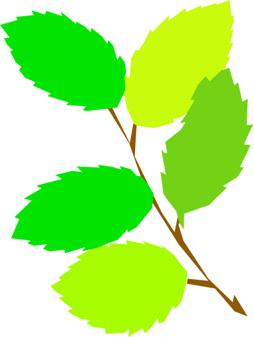 leaves branch serrated