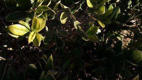 leaves  kansas  plant life