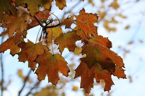 leaves  autumn  mood