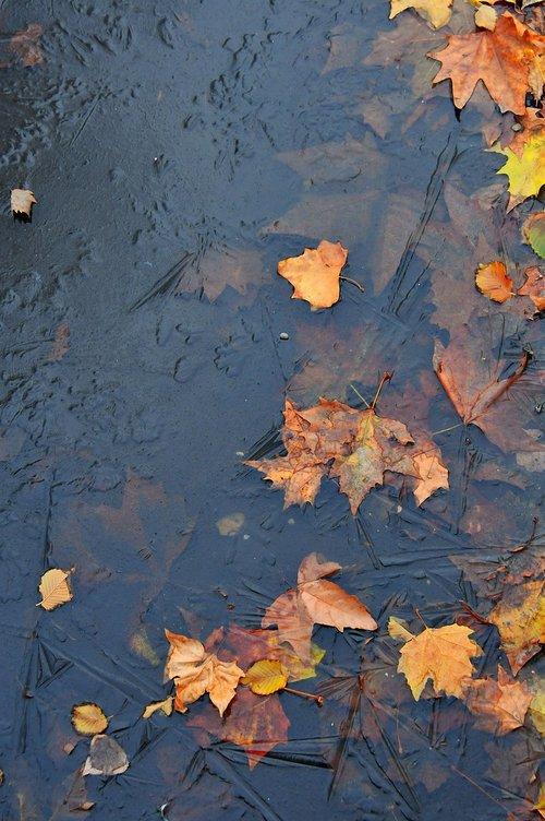 leaves  ice  frozen