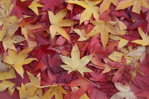 leaves  fall  nature