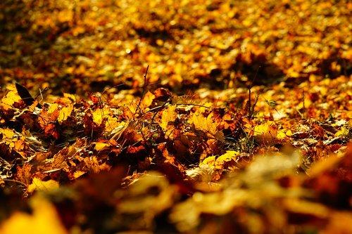 leaves  fall foliage  colorful