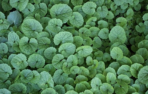 leaves  plants  green