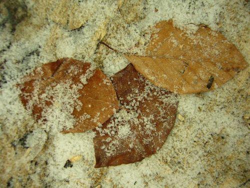 leaves hoarfrost autumn