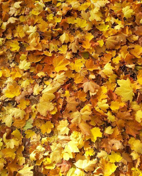 leaves fall foliage autumn