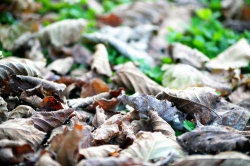 leaves shallows autumn