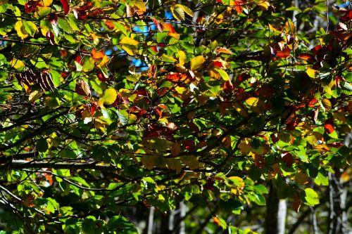 leaves aesthetic tree