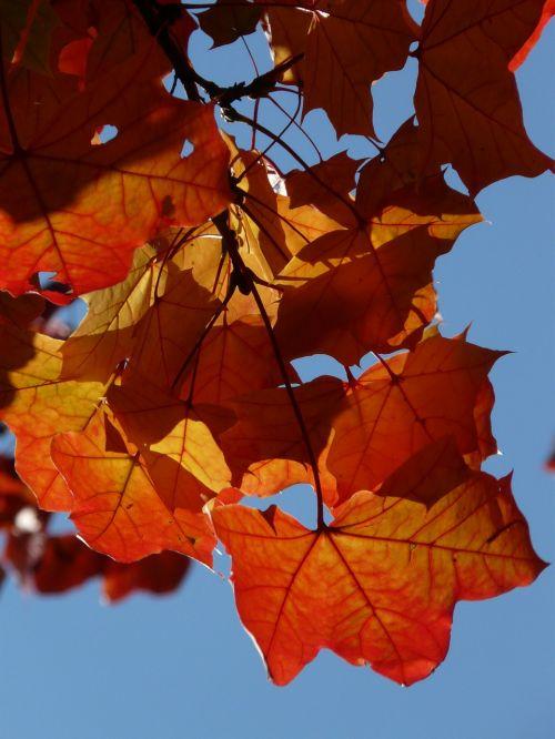 leaves autumn wind