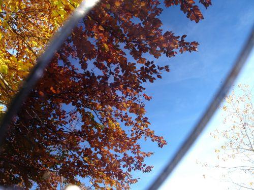 leaves sunglasses filter