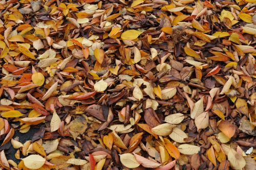 leaves autumn dried leaves