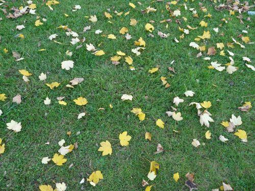 leaves fallen fall foliage