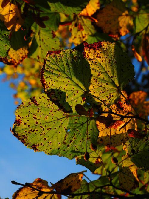 leaves autumn sunny
