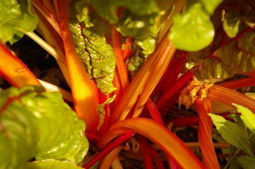 leaves stems vegetables