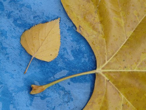 leaves size comparison style