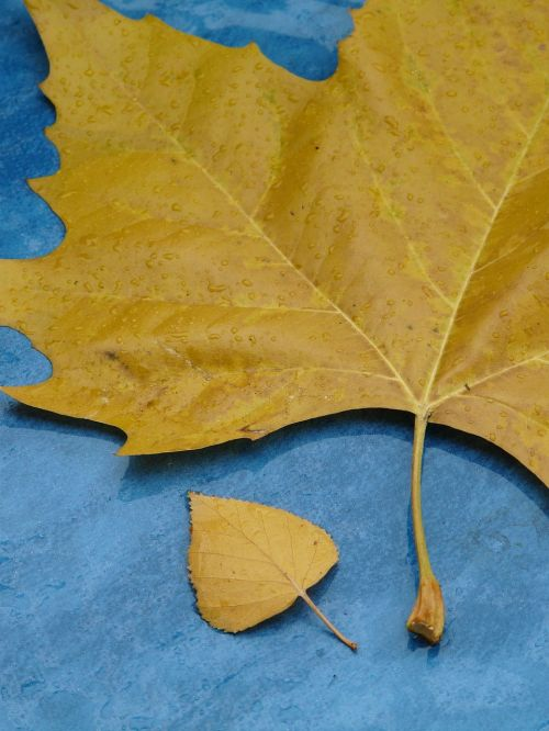leaves size comparison leaf