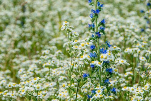 lapai,izoliuotas,atogrąžų,balta,gėlė,mistinis,botanikos,flora,fauna,vasara,senas,senas apdailintas,vintage,žiedas,žydėti,pavasaris,out,gražus,švelnus,švelnus,sodas,augalas,žydėti,gamta,fonas,laukinis augimas
