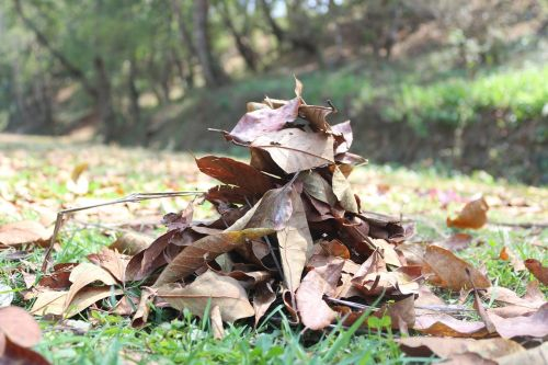 leaves dry dried