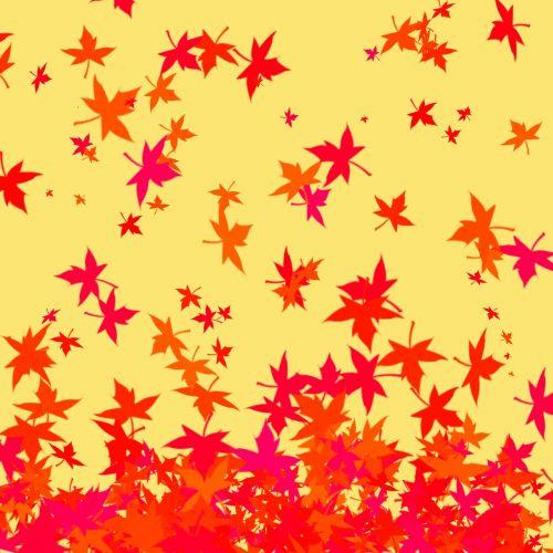 leaves autumn maple