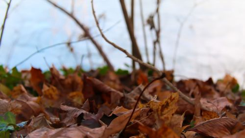 leaves winter river