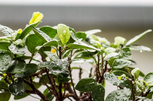 leaves plant houseplant
