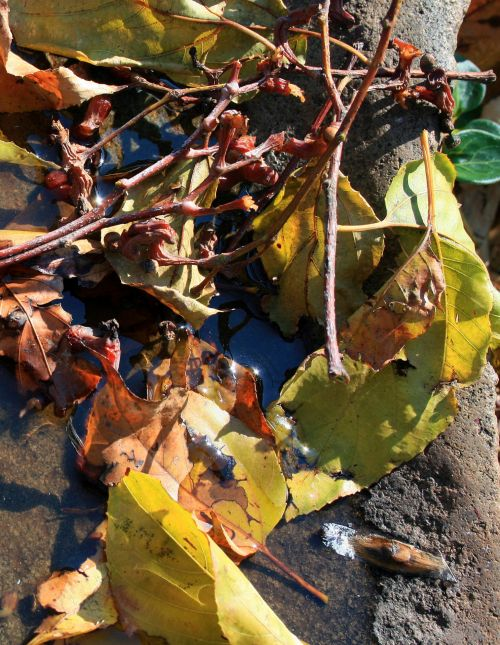 Leaves And Twigs In A Puddle