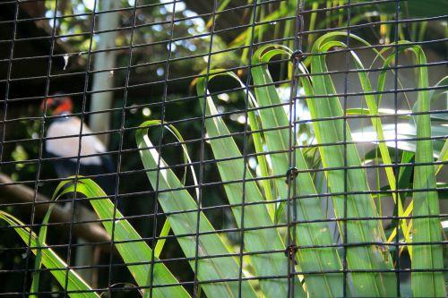 Leaves Behind Wire Mesh