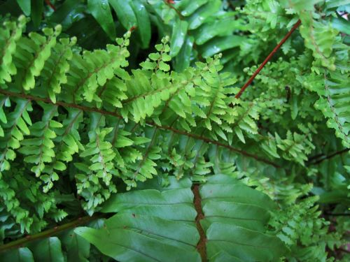 Leaves Of A Fern Plant