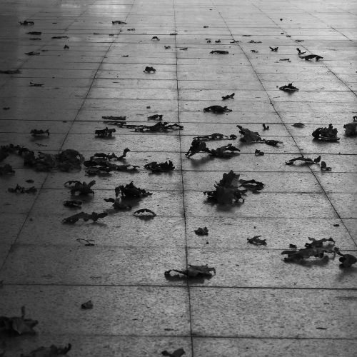 leaves on pavement autumn black and white