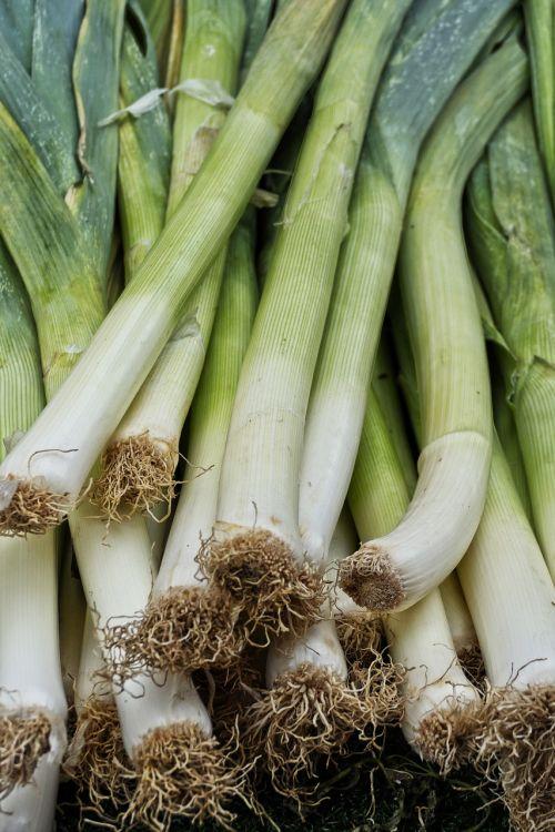 leek vegetables allium porrum