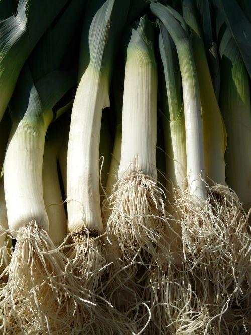 leek vegetables root