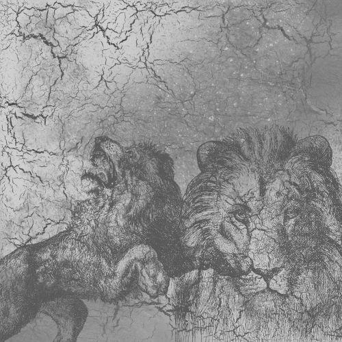 Lions Monochrome