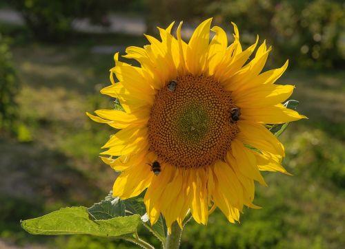 lego sunflower bloom