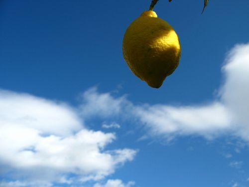 lemon citrus spain