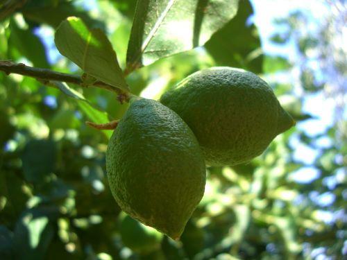 citrina,sicilija,italy,vaisiai