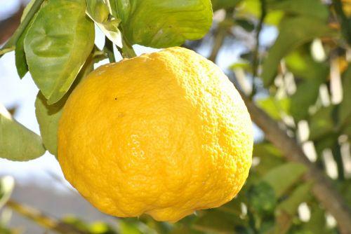 citrina,oranžinė,vaisiai,citrinas,maistas,rūgštus,azeda