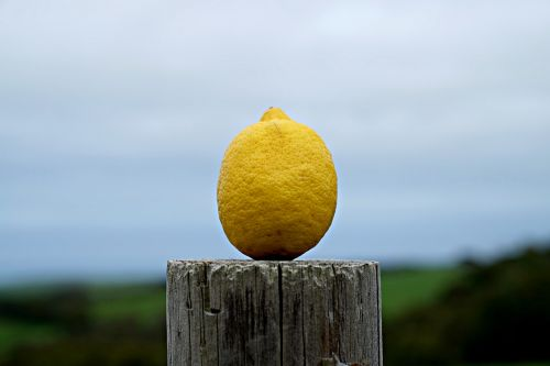 lemon natural farmland
