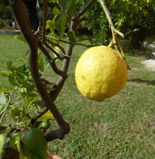 citrina,citrinmedis,italy,Toskana