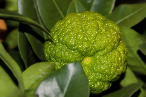 lemon mediterranean yellow