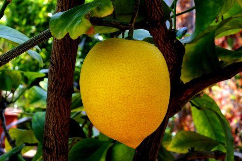 lemon citrus fruit limone