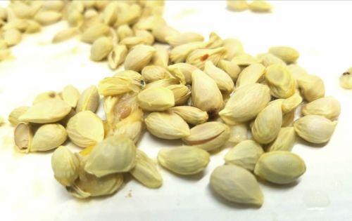Lemon Seeds