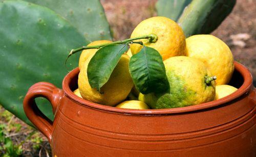 lemons cactus clay pot