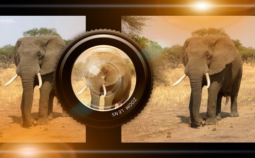 lens camera animals